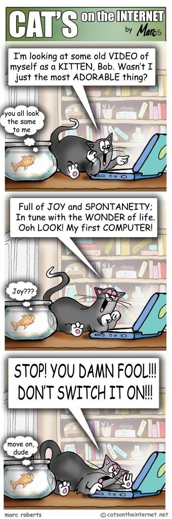 Cats00094Kitten